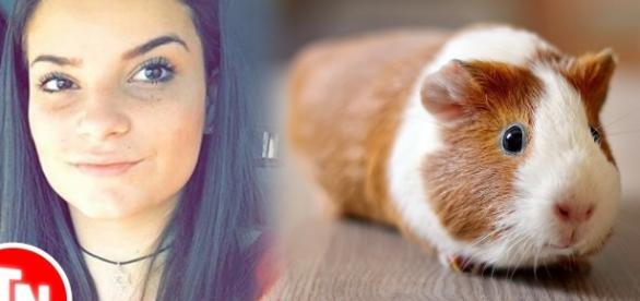 Jovem coloca porquinho-da-índia no microondas e causa revolta nas redes sociais