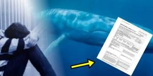 Baleia Azul e os seus meandros são expostos - Google