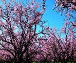 Previsioni meteo aprile 2016: temperature in aumento e bel tempo ... - correttainformazione.it