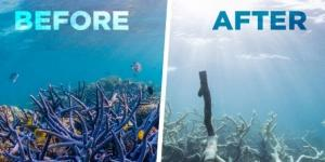 Emergency: the Great Barrier Reef is dying - theday.co.uk