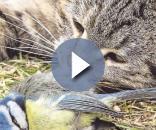 Katzen kastrieren, um Vögel zu retten? | Bad Tölz - merkur.de