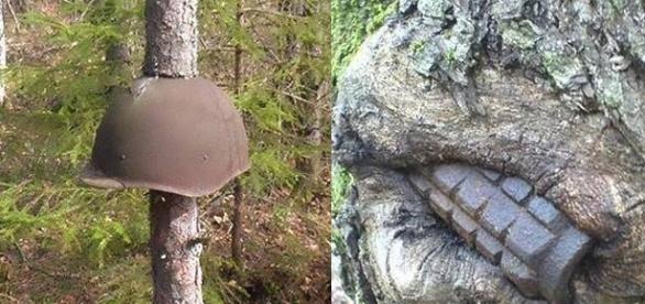 A natureza, aos poucos, vai evidenciando marcas da tragédia