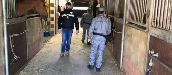 Torino: stalliere torturato per ore, titolari maneggio arrestati