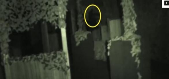 Investigadores dizem observar suposta aparição fantasmagórica (Caters TV)