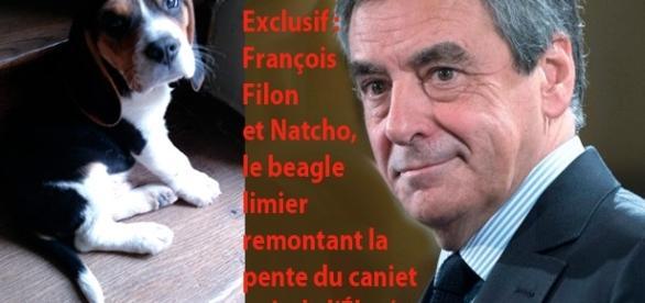 """En exclusivité (avec Le Gorafi), nous révélons le nom du beagle angevin chargé par François Fillon de remonter la piste du """"cabinet noir"""" de l'Élysée"""
