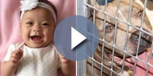 Bebê morre após ser atacado por cachorro