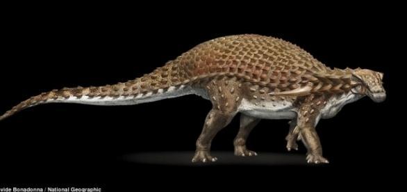 Descoperirea senzațională a unei fosile de 110 milioane de ani în Canada - Foto: National Geographic