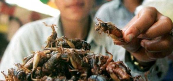 Eating insects is something that is done all over.
