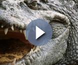 Religioso é devorado por crocodilos