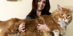 Australia, gatto lungo 120 cm: Omar famoso su Instagram