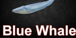 Balena blu, il folle gioco dei suicidi tra giovani