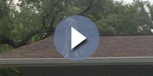 Família é acusada de maltratar esse cachorro que vivia no telhado. Então a verdade veio à tona