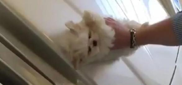 Maserati pulita con un cane maltese