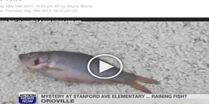 Peixes surgiram de repente em escola primária da Califórnia (Action News Now)