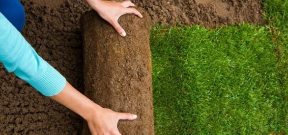 Das Wichtigste was du über Rasen wissen muss, damit dein Nachbar ... - garten-janzen.de
