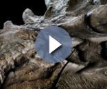 O dinossauro fossilizado tem cerca de cinco metros de altura e peso em torno de uma tonelada