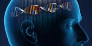 Scientists identify genes linked to human intelligence - EpilepsyU - epilepsyu.com