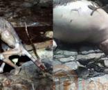 4 criaturas sinistras que já causaram polêmica pelo mundo ( Foto: Google)