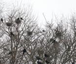 Ptaki ponoszą konsekwencje wprowadzenia ustawy Szyszki (fot. miastoiptaki.pl)