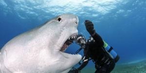 I grandi squali: squalo a bocca grande.
