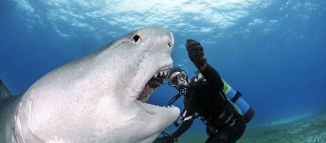 Avvistato grosso squalo a bocca grande in Giappone