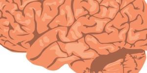 Cervello: il bisogno fondamentale di sonno
