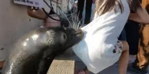 Girl dragged into water by sea lion receives treatment for rare ... - katu.com