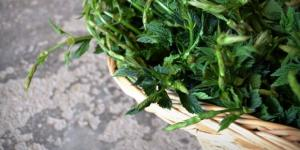 L'ingrediente segreto della cucina monacale: le erbe.