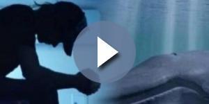 Blue whale, il gioco che porta al suicidio