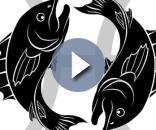 Oroscopo Pesci giugno 2017 - oroscopooggi.com