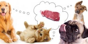 Why Are Vets Not Recommending a Raw Food Diet for Pets ... - pethealthcare.co.za