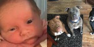 Drama cumplită a unei familii care și-a lăsat copilul nesupravegheat în prezența unor câini - Foto: Daily Mail