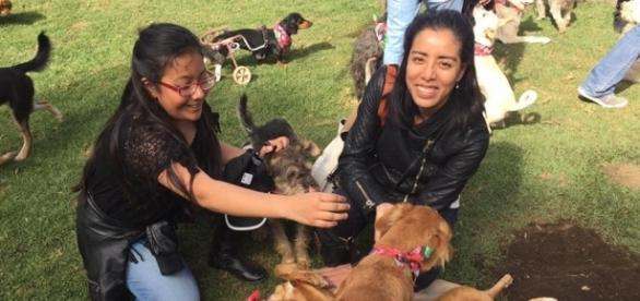Milagros Caninos: el santuario para perros maltratados (Facebook - Milagros Caninos)