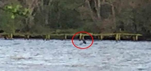 Monstro do lago Ness volta a aparecer depois de oito meses (Daily Mail)