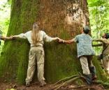 Ritmo de conservação e devastação é irregular ao redor do mundo