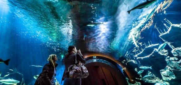 Ozeaneum in Stralsund | Museen - pinterest.com