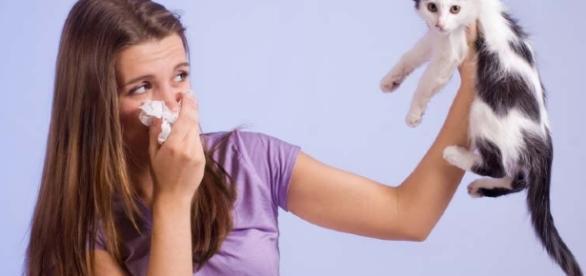 Faber, biochip para detectar alergias