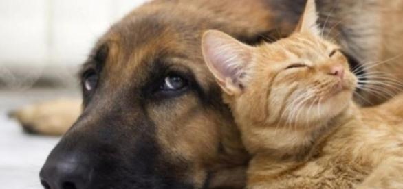 Amazing: Two Dogs Love Each Other so Hard - DireTube - Ethiopian ... - diretube.com
