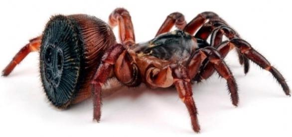 Aranha rara foi descoberta por um agricultor chinês