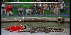 Testa nella bocca del coccodrillo: addestratore rischia la vita