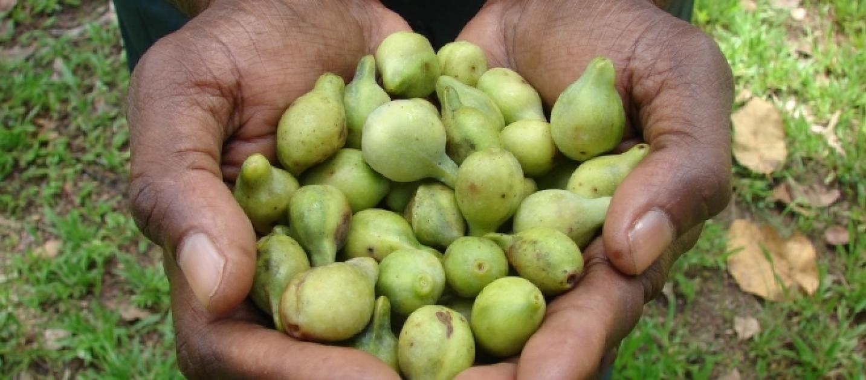 Plum Natural Health Foods