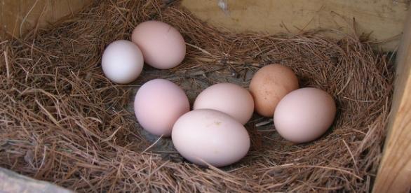 Why do egg shape differ? / Photo via Jake Wasdin, Flickr