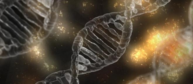 Design Inteligente x Evolucionismo neo-darwinista