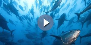 Allarme nei supermercati italiani: ritirato il tonno all'olio di girasole