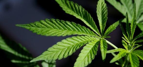 Should Marijuana Use Be Legalized? | Debate Club | US News - usnews.com