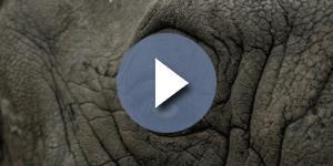 A doença do homem elefante, chamada de 'síndrome de Proteus', é congênita e também muito rara. ( Foto: Google)