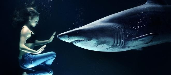 Save the sharks: declining populations leading to extinction