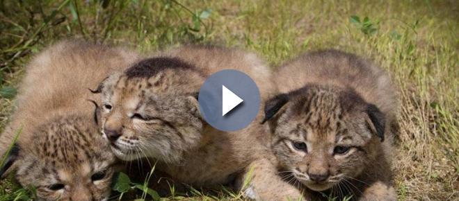 Programas de conservación de la naturaleza: Unas vacaciones diferentes