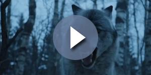 Arya and Nymeria reunion in 'Game of Thrones' season 7. Screencap: whycreate via YouTube