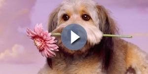 Cão ideal para seu signo, segundo a astrologia